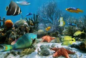 Stage Creatoo - Le monde de la mer